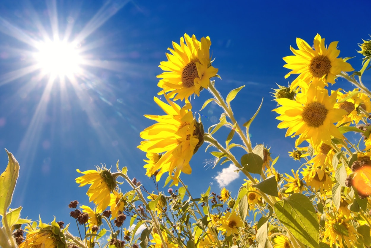 Solar Power Whitegoods are Go