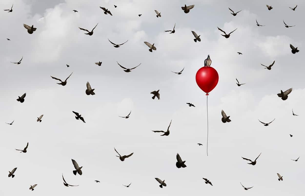 shutterstock_535704226-birds-and-balloon.jpg