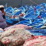 fisheries, aquaculture, morocco, china, viraj desai, seafood, healthfood