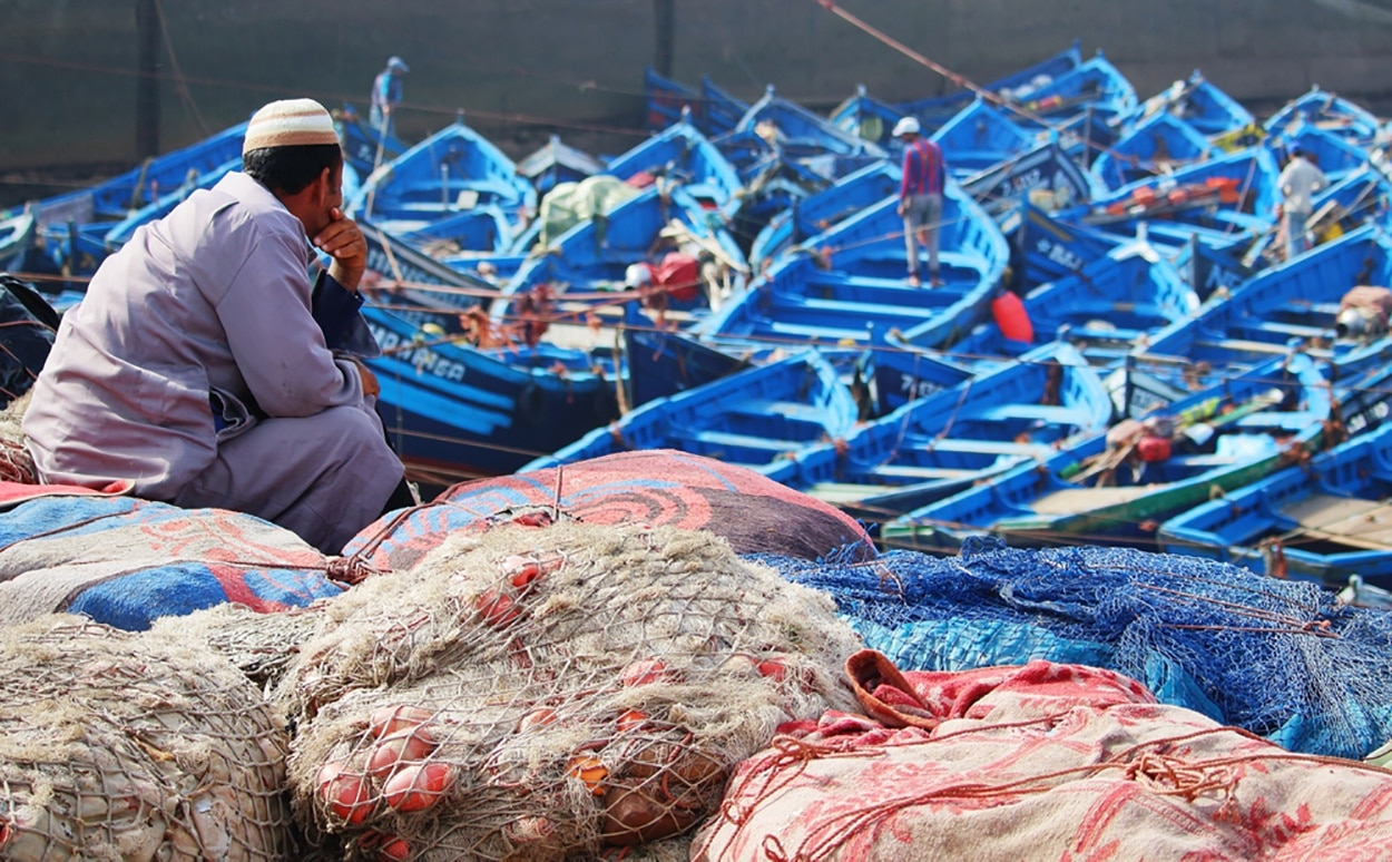 fisheries, aquaculture, morocco, china, viraj desai, seafood, healthfood