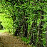 green finance, green financing, climate finance, investment, world bank