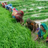 agricultural distress, rural farming, india, demonitisation