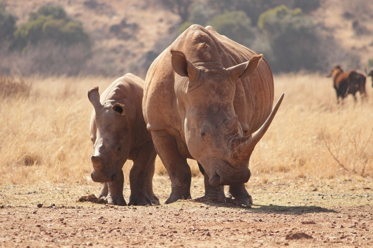 Connected Conservation to Protect Wildlife in Kenya